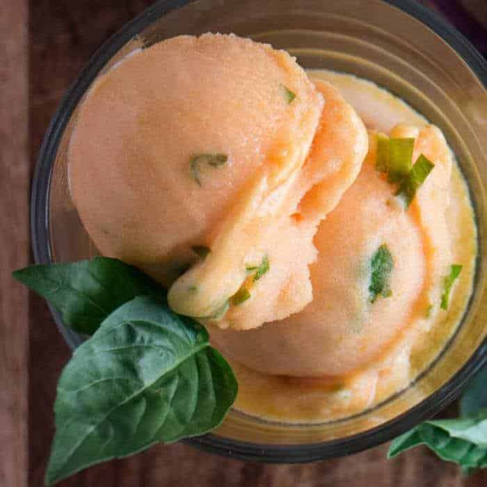 Blushing Apricot Sorbet With Fresh Thai Basil is gluten and dairy free! Shown here with a sprig of fresh green Thai basil.