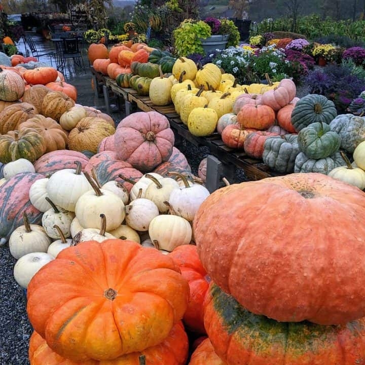A free stock photo of many varieties of pumpkins at a nursery from flickr.